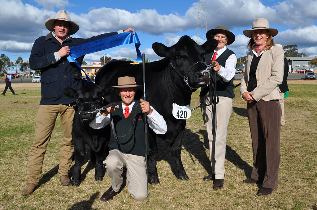 Bendigo National Beef 2013 Champion Snr Cow